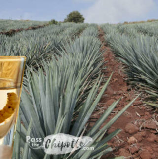 Tequila & Mezcal – Mexico's Beloved Spirits